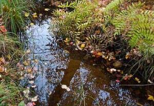 fall-streamside-2