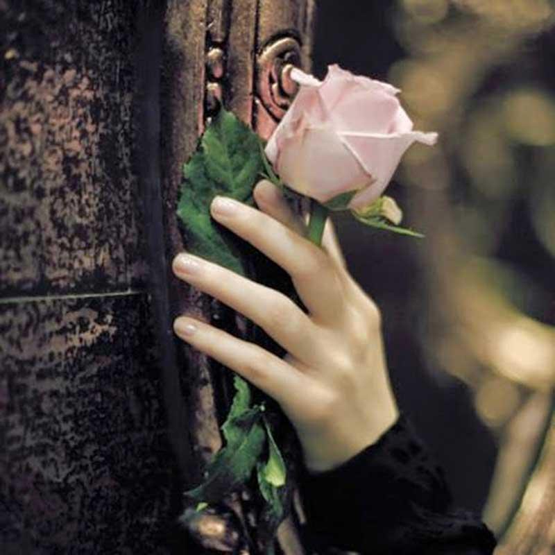hand-rose
