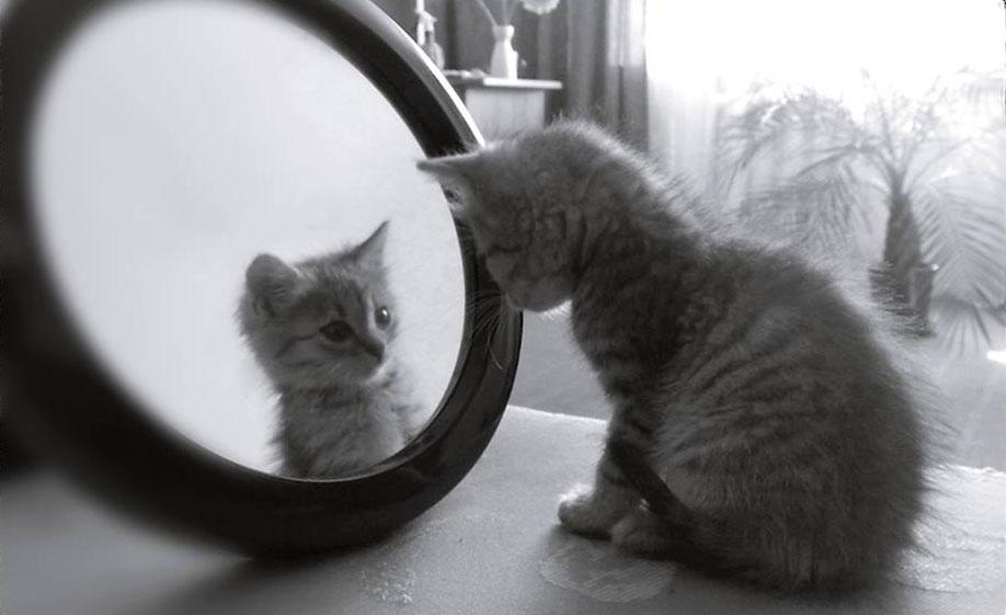 Kitten-in-mirror