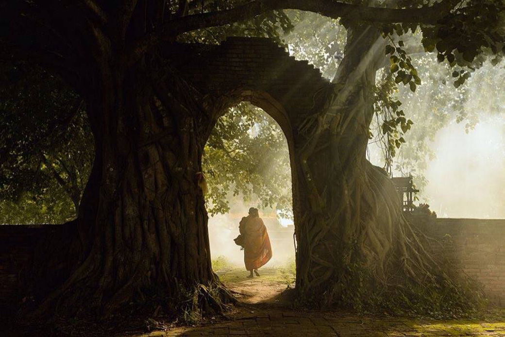 monk-gate-tree