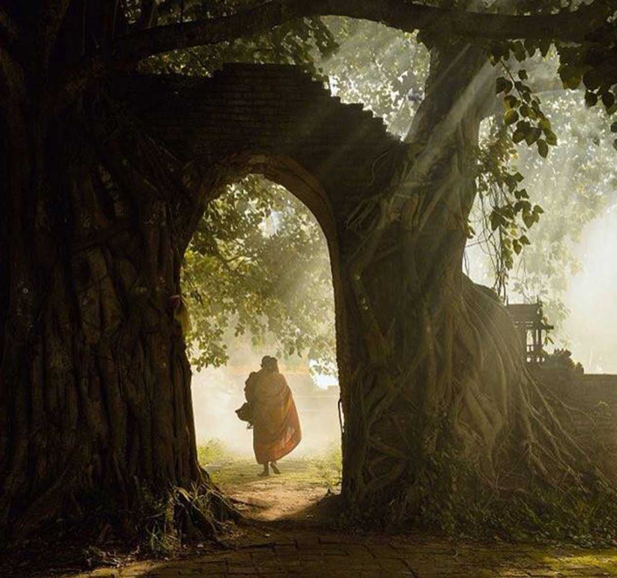 monk-gate-tree-cropped